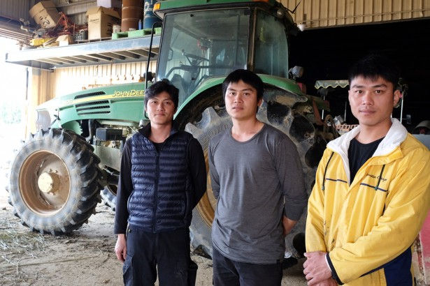 「被休耕」失業 七年級返鄉務農三兄弟:政策讓農民看不見未來