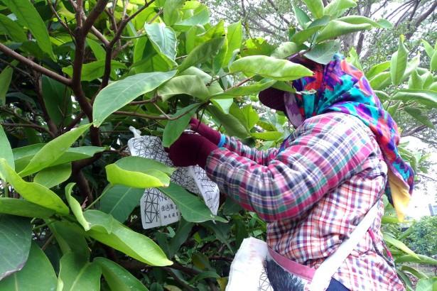 【公民寫手】【師徒共學】2015 新手農人培力計畫