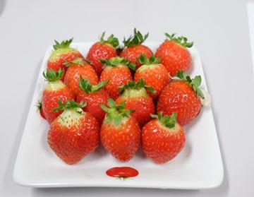 用水凝膠膜栽培出來的草莓,還在試驗階段