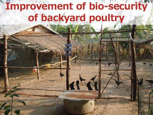 禽流感過後產業如何重建?從泰國經驗看台灣