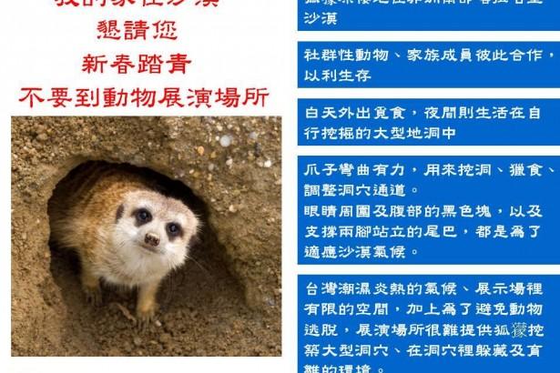 狐獴的家在沙漠 動社:拒絕支持動物園引進台灣展演