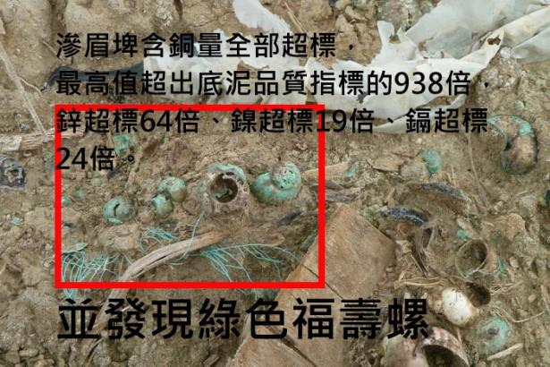 桃園滲眉埤驚現綠色福壽螺 重金屬污染嚴重 環團要求官方莫縱容