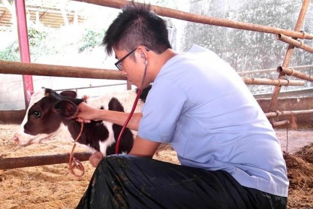 打破鮮乳壟斷,獸醫師上網賣牛奶 動保團體呼籲公佈酪農挑選標準