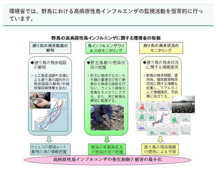 日本環境省每年定期針對野鳥進行有系統的病毒監測,相關步驟、資料與監測結果均公開網站上。