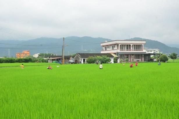 遏止農地炒房 宜蘭立法 未來有農保才能蓋農舍