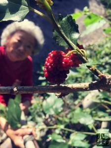 充滿期待的望著飽滿的果實