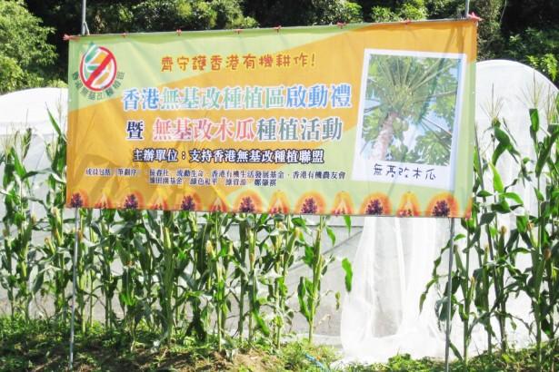 基改種子難管控 香港近七成木瓜為基改作物 有機農場也淪陷