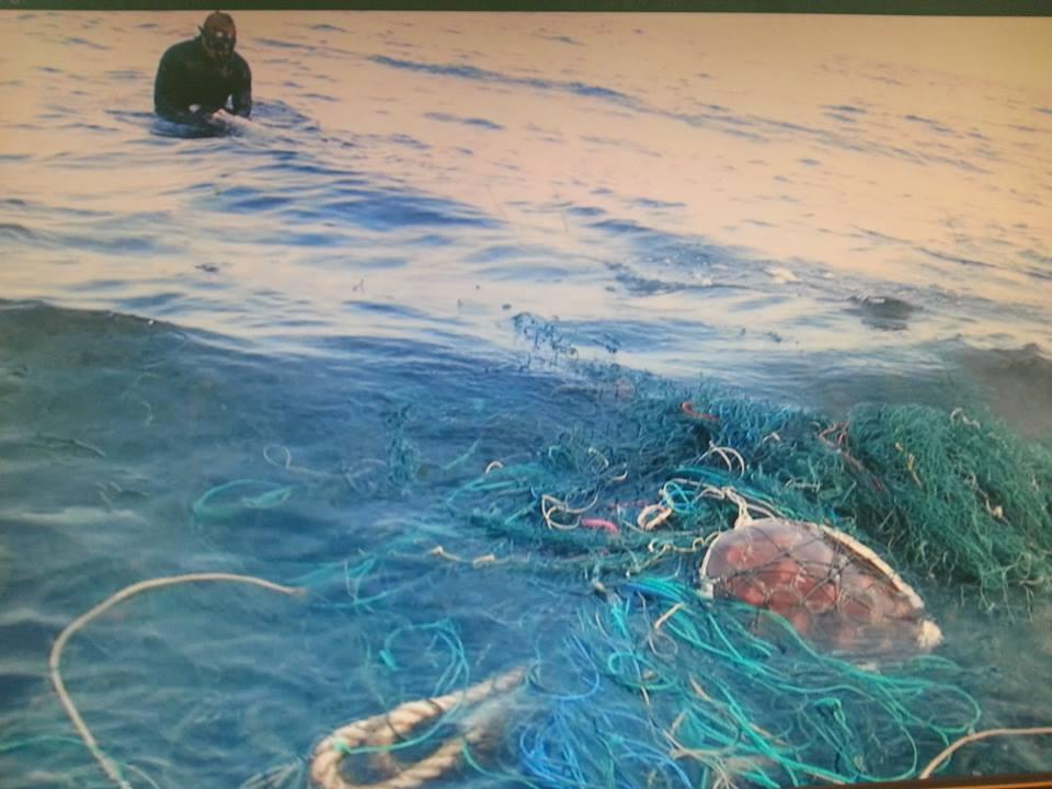 廢棄網具卡住綠蠵龜,志工隊救援時已窒息而死