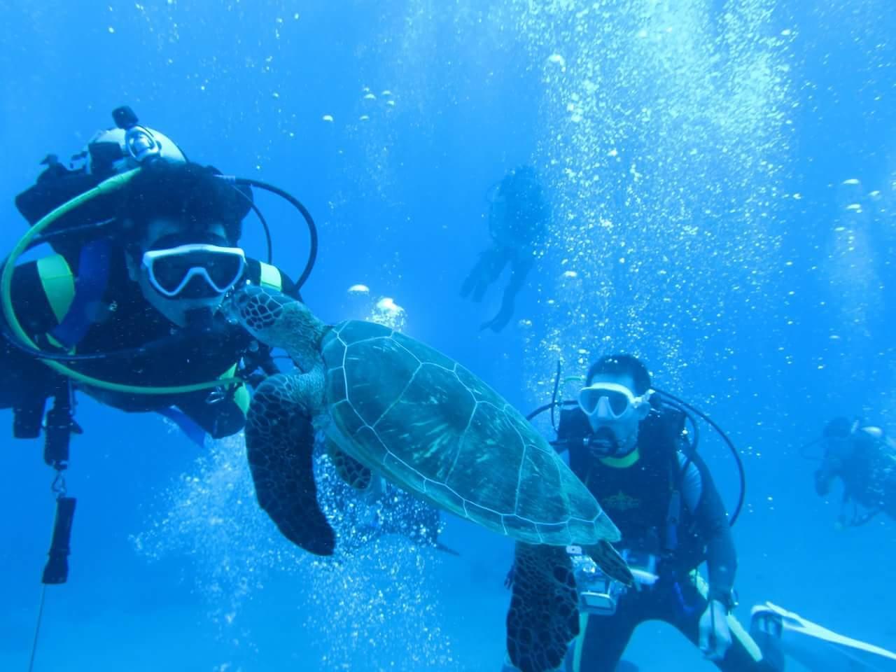 許多觀光客因為海龜慕名而來(李益利攝)