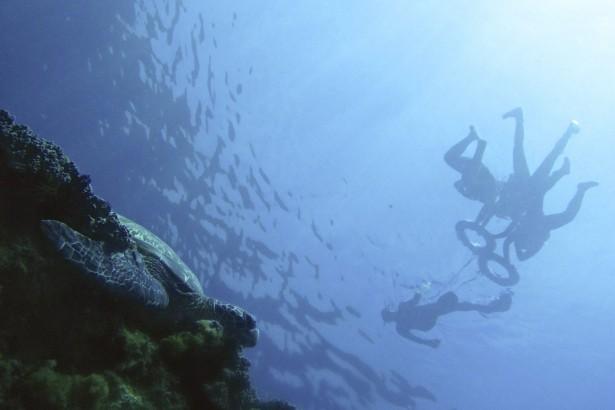 海龜的水上世界 (孫介珩攝影)
