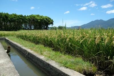 右邊SRI田區預估可省三成水