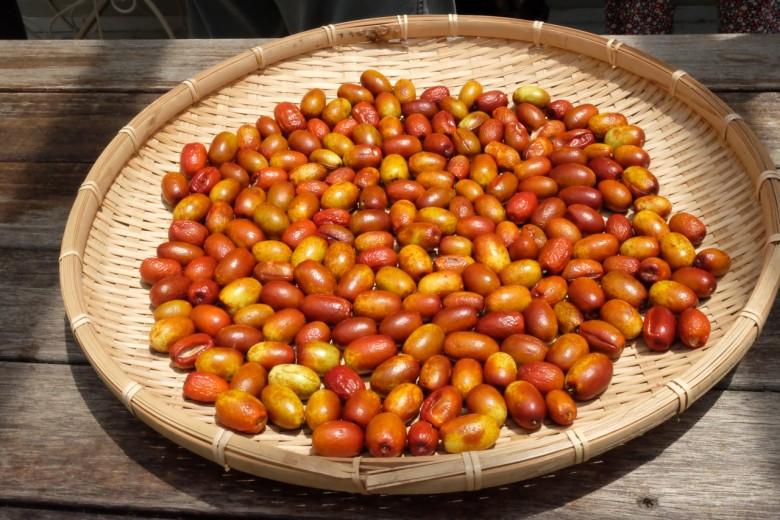 日曬的紅棗