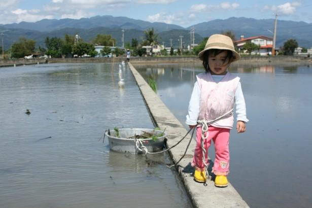 2歲下田撿福壽螺 小小默陪科學家爸媽做實驗