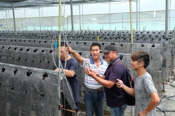 農民組科技小組 手機App測土溫光照 幫作物說話