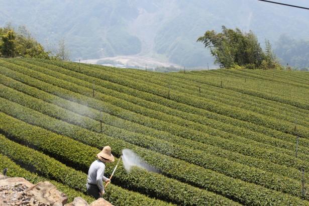 天然防治資材非農藥 解禁免登記,最快月底公布品項
