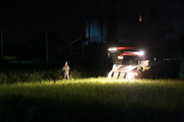 晶圓之外 直擊台灣最大代工產業:水稻代耕