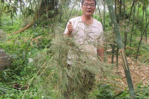 蘇迪勒颱風對竹筍產業造成嚴重傷害,被害面積超越文旦柚。(圖片提供/桃園市政府農業處)