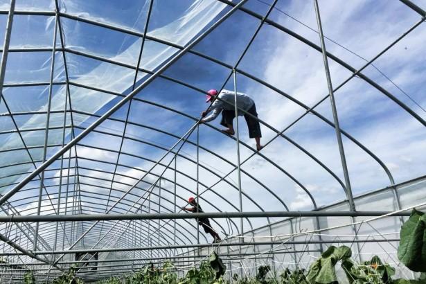 蘇迪勒災情農業設施受損嚴重 地方籲推動設施園藝專業規範與證照