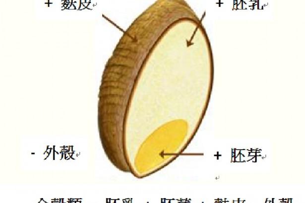 含有果皮(外殼糠層+麩皮)、胚乳、胚芽的完整穀粒。田龜計畫有機種植的養生全穀有:蕎麥、薏仁、紅藜、紫米、莧米、小米,都是無麩質的。