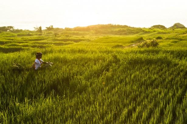 當良田被觀光飯店佔據│《太陽的孩子》海稻米守護傳統價值