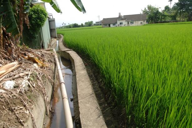 防鎘米做半套 彰縣加嚴東西二三圳搭排水質要求