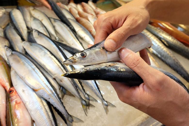 秋刀魚的嘴巴會泛黃光,代表新鮮。