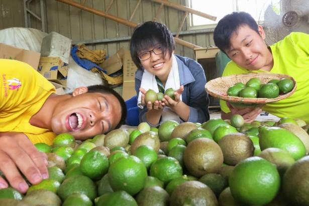 來到檸檬選別的課程,怎麼挑選檸檬成了年輕人的小小挑戰