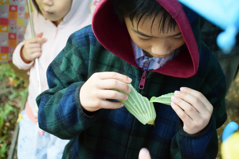 小朋友專注的觀察水生植物的氣室構造。(圖/潘子祁攝)