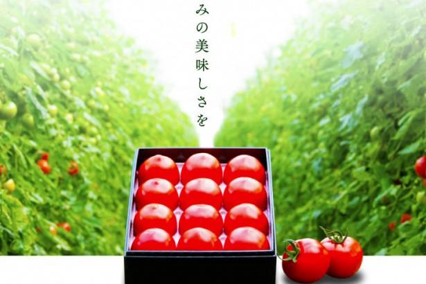光樹番茄  一顆番茄250元的奇蹟