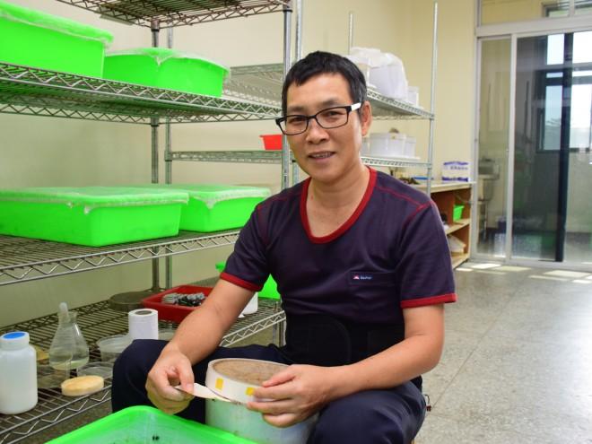 飼養草蛉20多年的古政中,熟練地提供吸滿水氣的棉花供草蛉、椿水攝食,並撿除便便等環境,讓牠們優渥的繁衍。(圖/潘子祁攝)