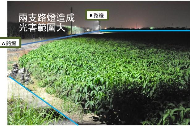 晚上不關燈 大豆猛長葉不開花 農友損失慘重