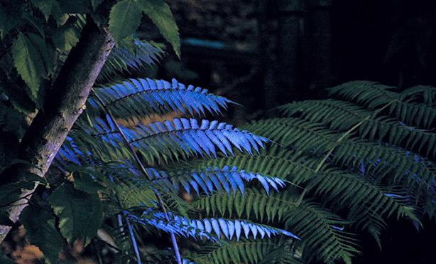 夜晚的銀蕨。(photo from The Tourism New Zealand)