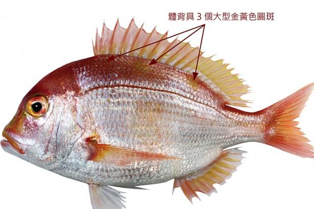 立刻升級買魚高手 台灣721種水產圖鑑線上看