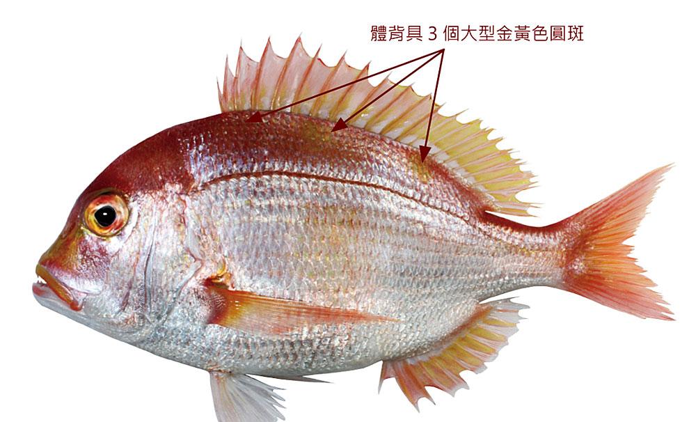 立刻升級買魚高手 台灣721種水產圖鑑線上看 | 上下游News&Market