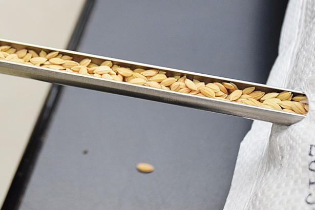 米界柯南大挑戰 專業米穀檢驗員