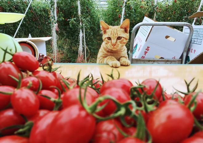 生產好的農產品,也必須有好的購物流程才能送到消費者餐桌4