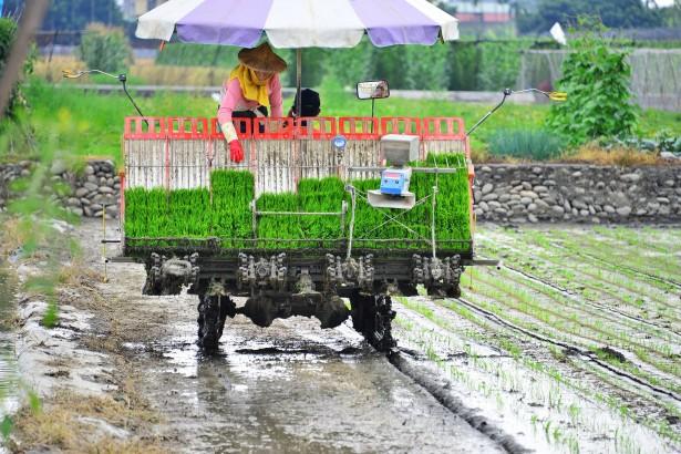不拚信貸拚產銷 美濃農會推地方轉型