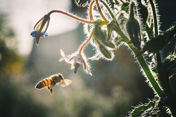 全球首次證實 1ppb農藥益達胺 讓蜜蜂幼蟲腦崩壞