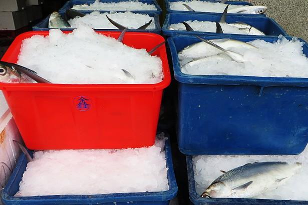 昔日銷中樣板 誰讓虱目魚過寒冬?