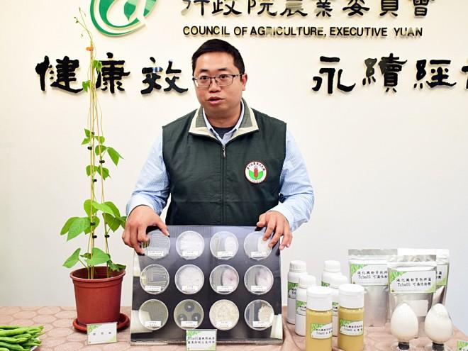 台中區農改場助理研究員郭建志說,和苗栗、高雄兩場相比,台中農改場的Tcba05對菜豆的顯著性較高。(圖/潘子祁攝)
