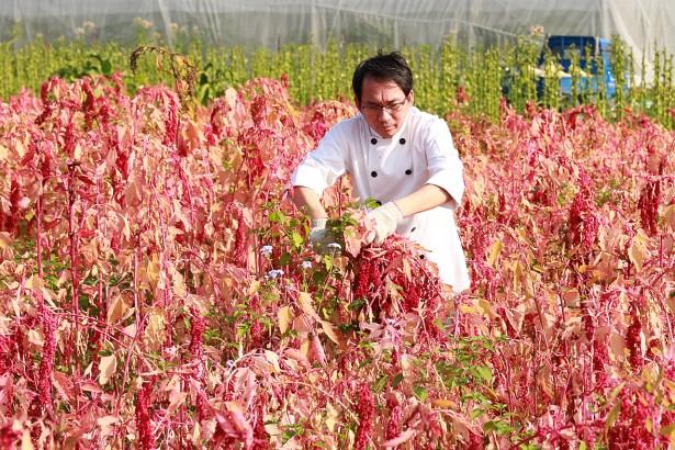 原生種紅藜做酵母 水果麵包青草香