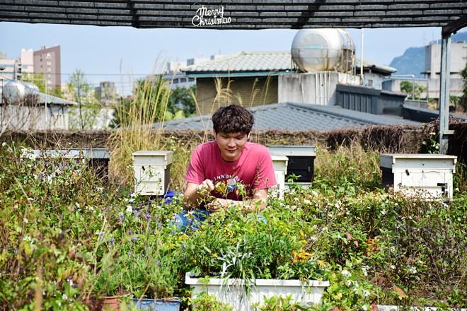 王庭碩認為,城市養蜂的先決條件在於穩定蜜源,而一座布滿鬼針草的花圃就能帶來很好的效果。(圖/潘子祁攝)