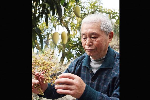 芒果育種傳奇 黃金煌85歲辭世