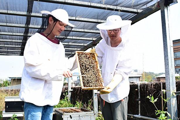 最划算的房東 Bee Hotel顧蜂養蜜