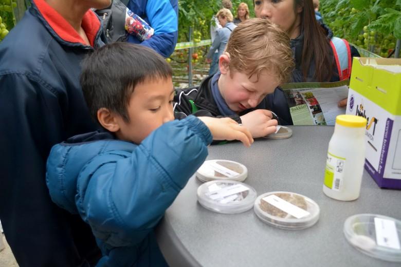 小朋友觀察有哪些生物防治的昆蟲