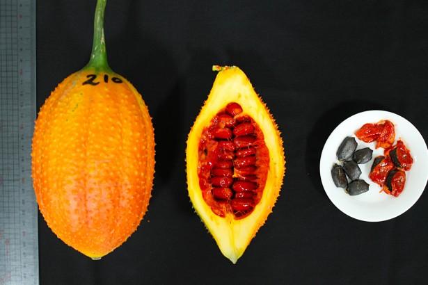 阿美族傳統木虌果Sukuay 機能果汁新寵