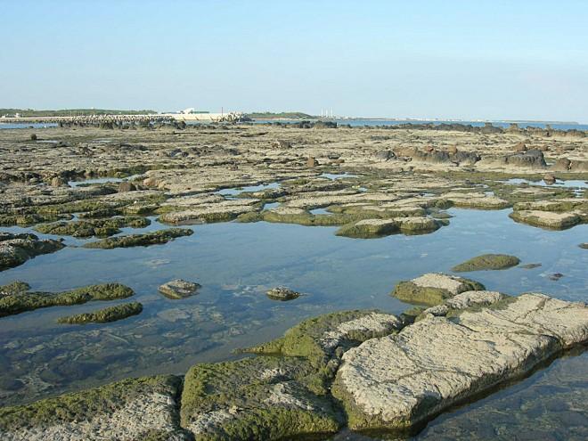 烏崁社區的潮間帶,往年靠近5、6月可輕易看見馬糞海膽蹤跡。(圖片提供/黃健忠)