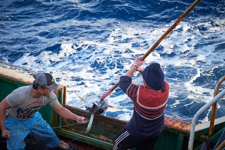 起鉤、下鉤時間各自長達4小時,期間休息時段僅15分鐘,如果魚況佳,更會連續作業直到工作完成,才被綠色和平、國外媒體稱作血汗漁業。(圖/綠色和平Mark-Smith提供)