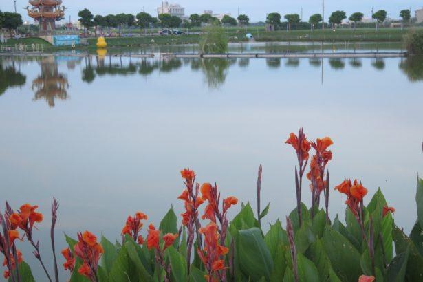 田龜計畫之一:新生態,代安宮的生命之池。