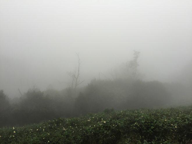 下午四點,石碇的山霧又來了,趕緊下山,期待下次再見面。